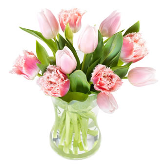 Lovely pink tulips