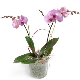 Orchidee versturen