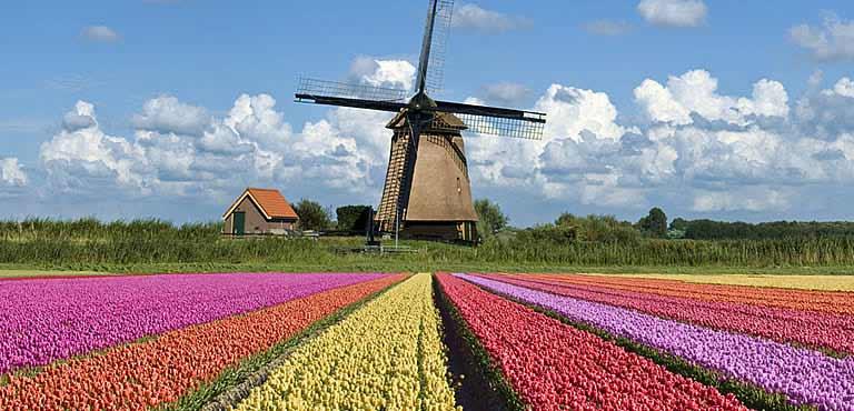 Contact Euroflorist Netherlands