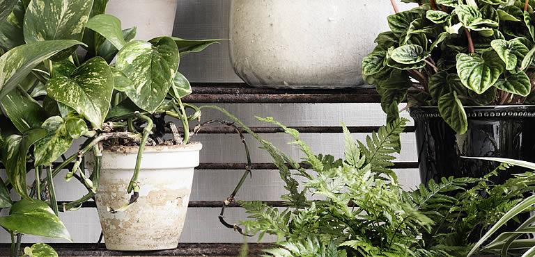 Planten versturen