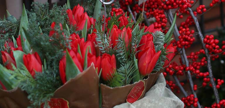 Tulips for the holidays