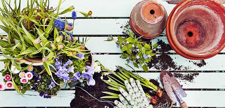 Verzorging van bloemen en planten