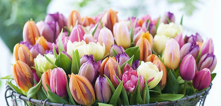 Laat frisse tulpen thuis bezorgen