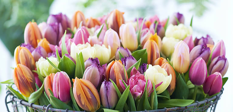 Tulip delivery