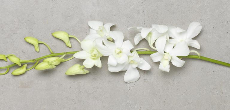 Orchidee bezorgen