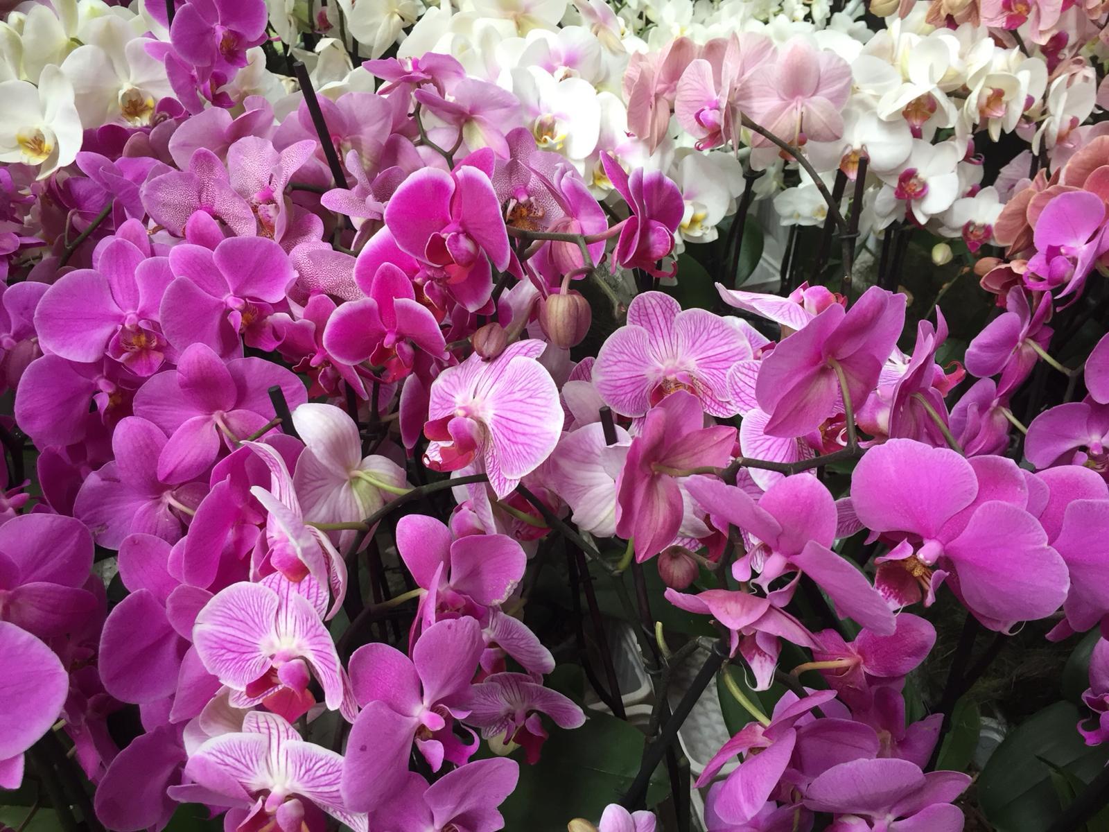 verzorgingstips orchidee