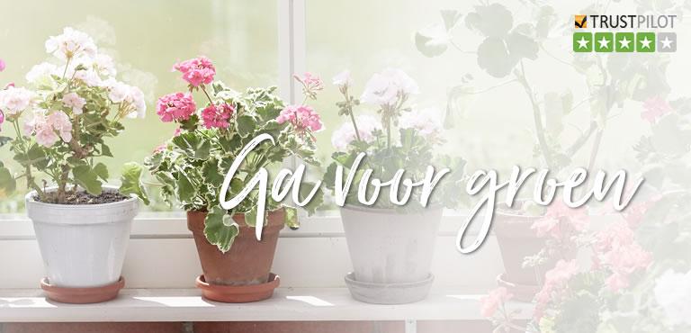 Moederdag planten laten bezorgen