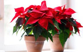 December - Kerstster