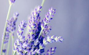 Lavender: Fairness and tenderness