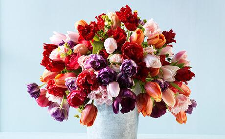 Tulpen - het stralende middelpunt!