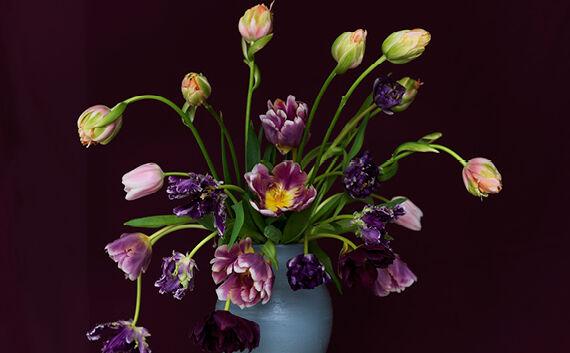 tulpen zijn onze nationale trots