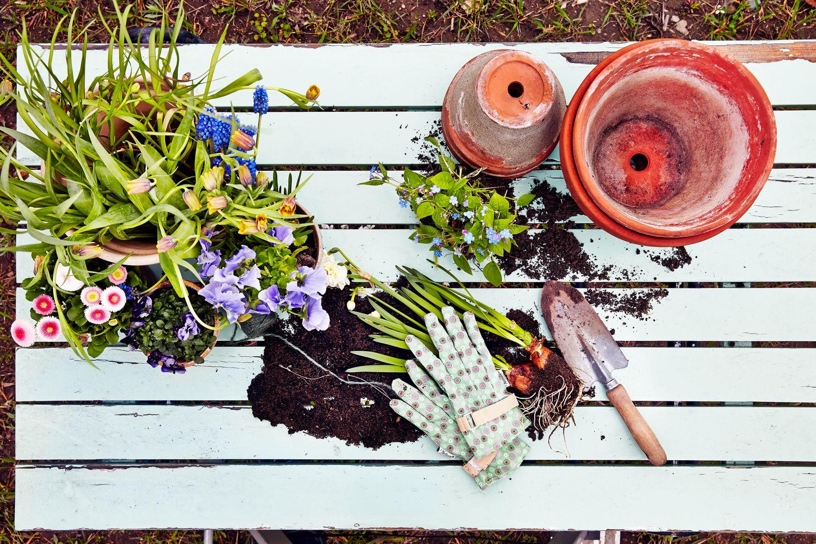 Bemest je planten twee keer per jaar