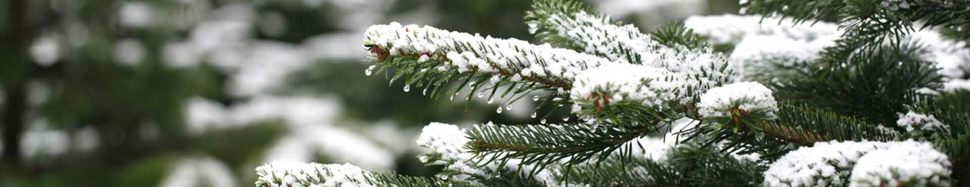 Wat te doen met je kerstboom na Kerst?