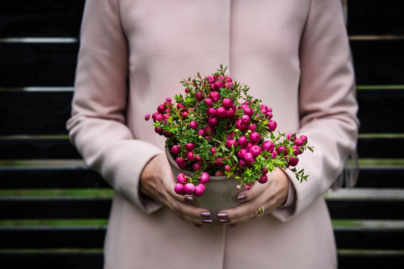 Controleer je planten op ongedierte