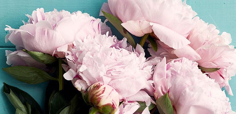 Verstuur bloemen