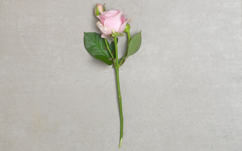 En ros